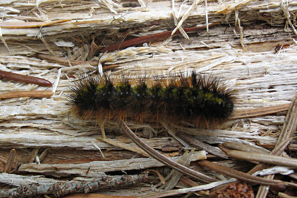 2010 insects