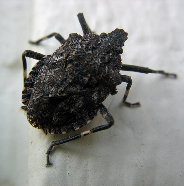 April 12, 2011; Beetle, Medford, OR