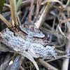 May 11, 2012 - Moth at Emigrant Lake, Oregon