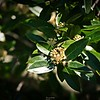 rx10_007_bees_20210220