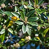 rx10_001_bees_20210220