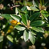 rx10_003_bees_20210220