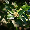 rx10_006_bees_20210220