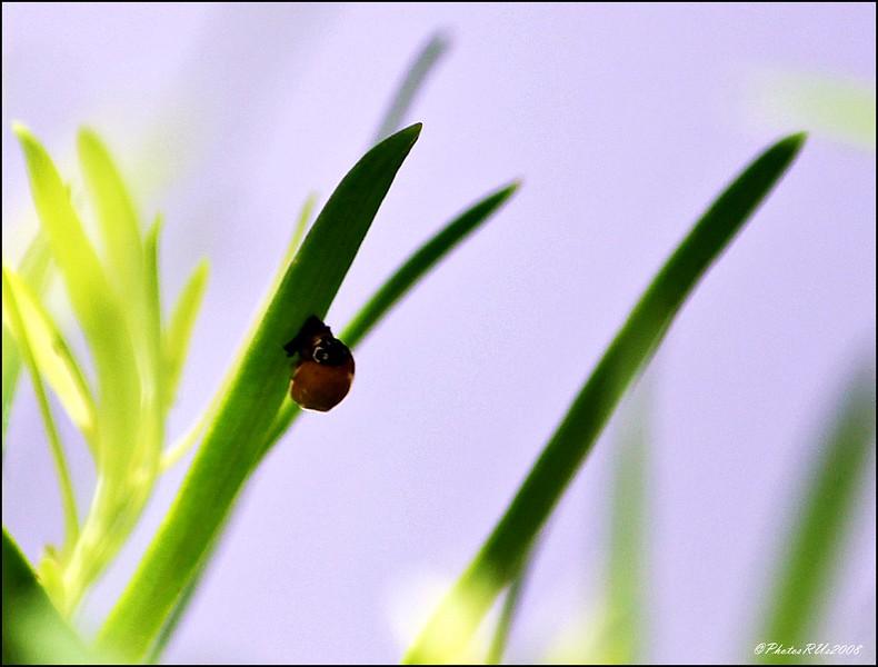 Spotless Ladybug...Aug 2, 2011...Clearwater, Florida
