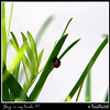 Spotless Ladybug...Aug 2, 2011...Clearwater, Florida