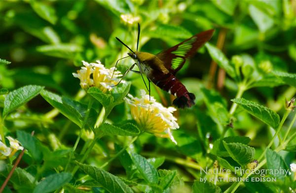 Moths and Caterpillars