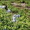 P1140172_Spicebush Swallowtail