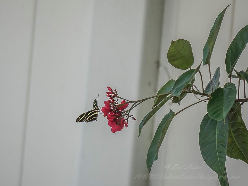 2019-05-22_ m1 300iso200ap  butterfly __5220098