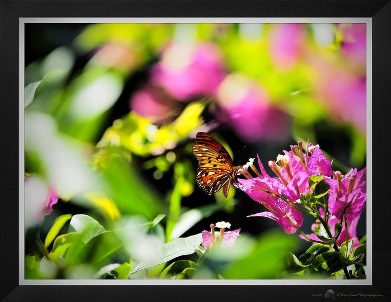 2016-07-15_PSKP7150024_Butterflyl,Clwtr,Fl