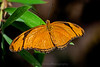 Orange and black Butterfly sitting on a green leaf with a brown background.