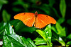 Orange Butterfly sitting on a leaf.