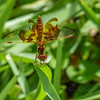 2017-10-13_P1110122_Dragonfly