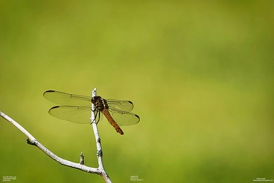 008_dragon fly with cpl_2021-07-24