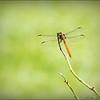 2017-08-25_P8253023c_Dragonfly,Clwtr