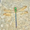 2018-05-27_20180527_164743_Dragonfly_Enhancer_yesterfeller,light adj -10