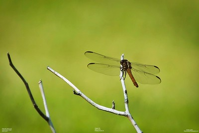 006_dragon fly with cpl_2021-07-24