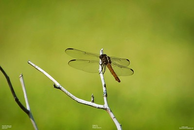 007_dragon fly with cpl_2021-07-24