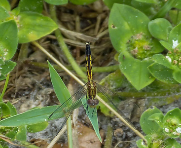 2017-10-13_P1110091_  Dragonfly
