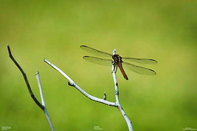 005_dragon fly with cpl_2021-07-24