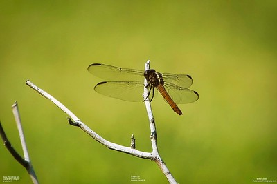 009_dragon fly with cpl_2021-07-24
