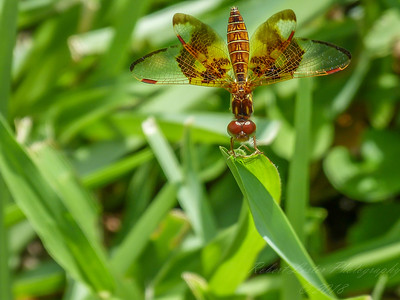 2017-10-13_P1110121_Dragonfly