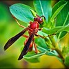 029_paper wasp_2021-06-04