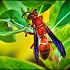 046_paper wasp_2021-06-04
