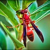038_paper wasp_2021-06-04