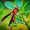 028_paper wasp_2021-06-04