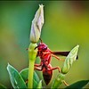 041_paper wasp_2021-06-04