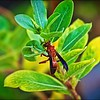 047_paper wasp_2021-06-04