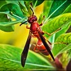 045_paper wasp_2021-06-04