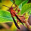 042_paper wasp_2021-06-04