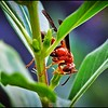 021_paper wasp_2021-06-04