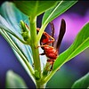 019_paper wasp_2021-06-04