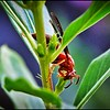 023_paper wasp_2021-06-04