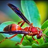 034_paper wasp_2021-06-04