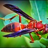 033_paper wasp_2021-06-04