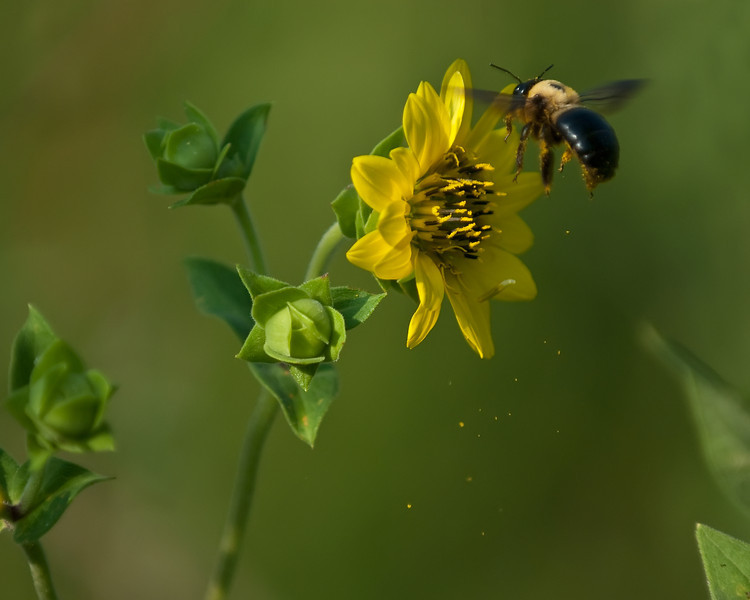Pollination in Action!