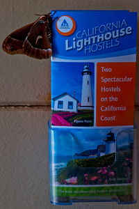 Silk Moth HI Lighthouse hostels brochure