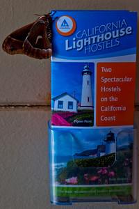 Silk Moth HI Lighthouse hostels brochure