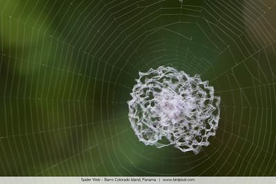 Spider Web - Barro Colorado Island, Panama