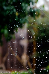Spider Web on a Rainy Day 6