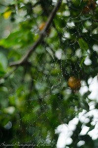 Spider Web on a Rainy Day 8