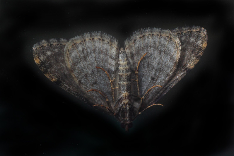 IMAGE: http://buttonmasher.smugmug.com/Animals/Insects/i-9n7vcPb/0/L/IMG_0057%20web-L.jpg