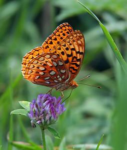 6745 Butterfly