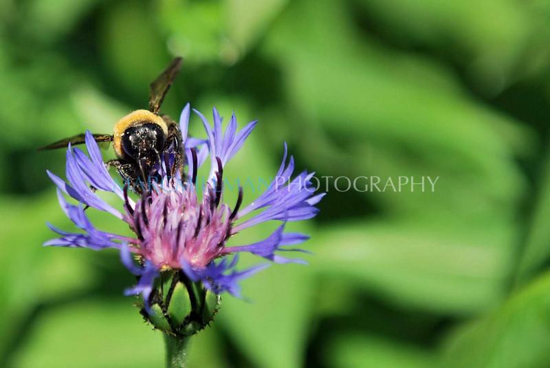 Feasting (Brooklyn Botanical Gardens- Wed 5/5/10)