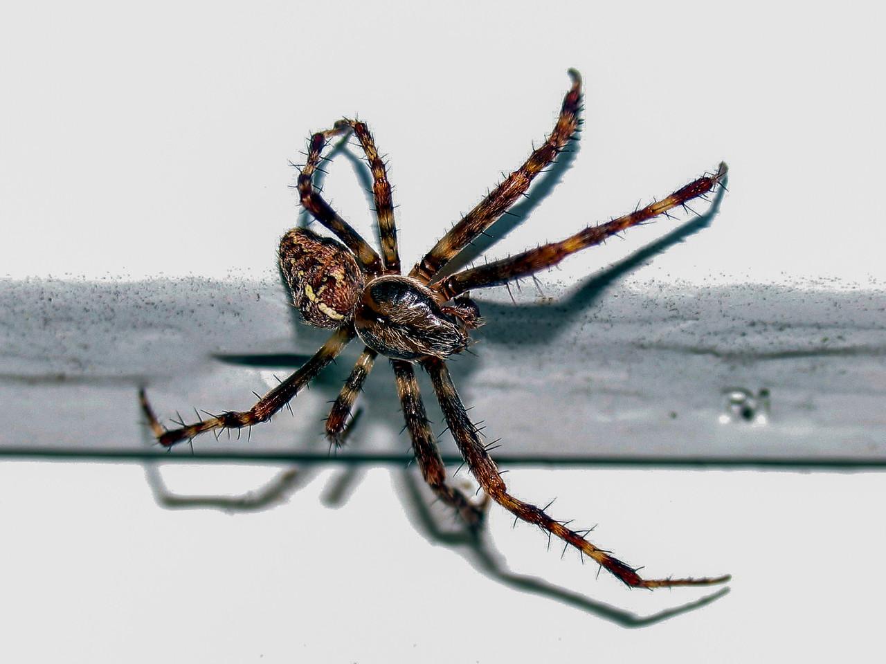 Spider crawling on aluminum siding - October 2005
