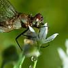 Dragonfly in Rain