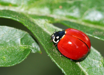2192 Ladybug